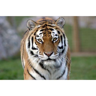 """Крем """"Тигровый бальзам"""""""